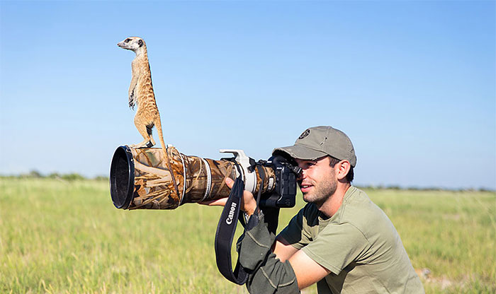 Photographer Became A Handy Lookout Post For Cute Meerkats