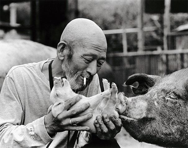 otchan-cute-pig-farmer-toshiteru-yamaji-18