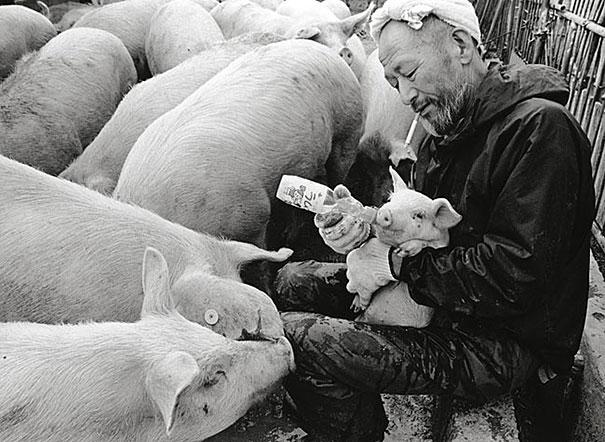 otchan-cute-pig-farmer-toshiteru-yamaji-4