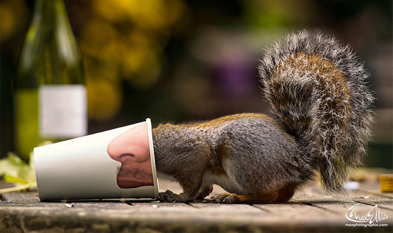Adorable Pictures Of Curious Squirrels By British Photographer Max Ellis