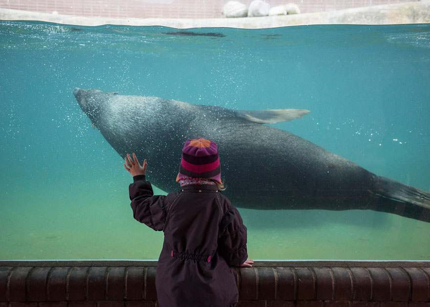 Lost-Behind-Bars-Photos-Zoo-Animals-Elias-Hassos-10