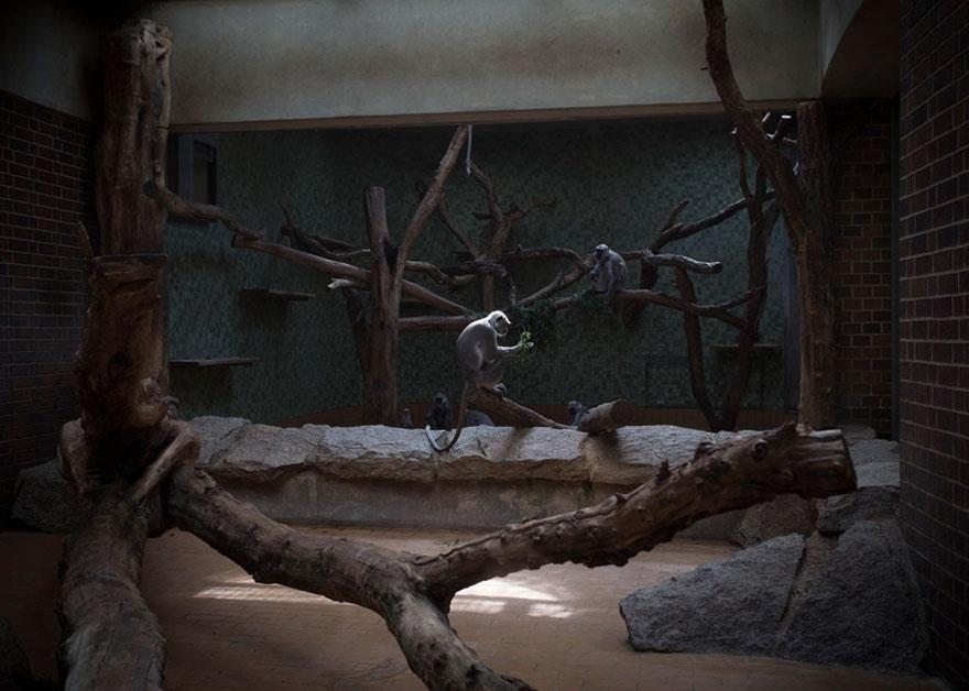 Lost-Behind-Bars-Photos-Zoo-Animals-Elias-Hassos-12