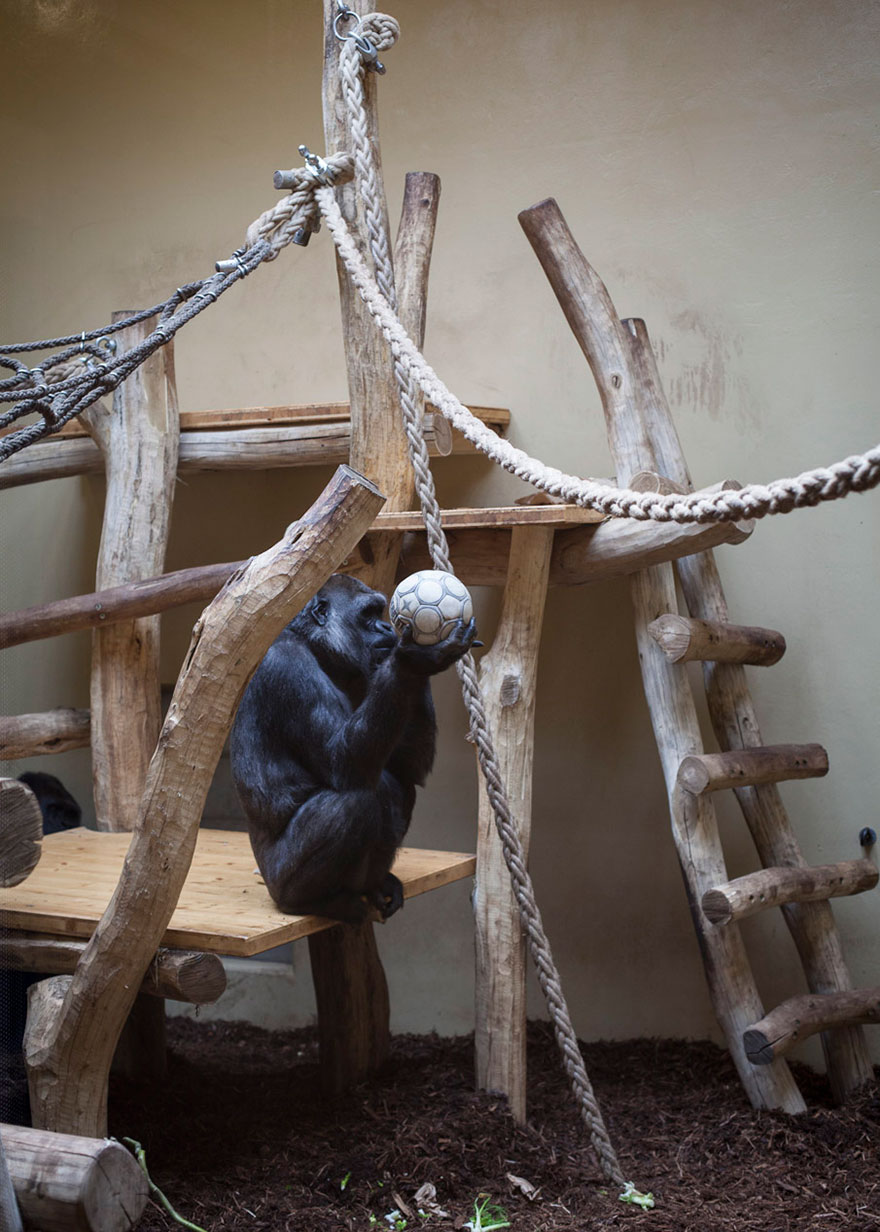 Lost-Behind-Bars-Photos-Zoo-Animals-Elias-Hassos-4
