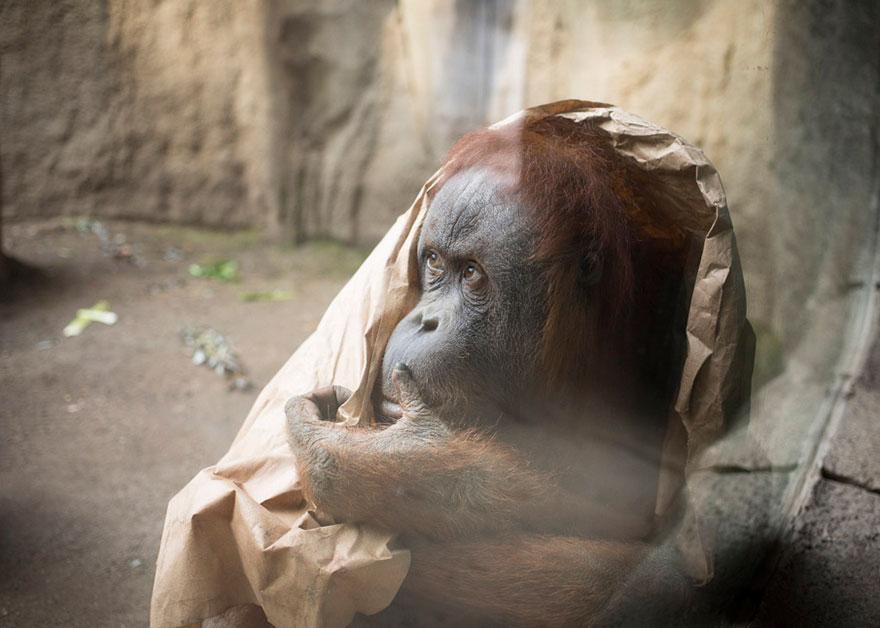 Lost-Behind-Bars-Photos-Zoo-Animals-Elias-Hassos-8