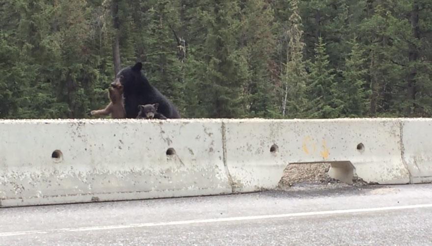 bear-cub-rescue-video-ricky-forbes-4