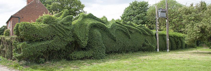 dragon-shaped-hedge-topiary-john-brooker-4