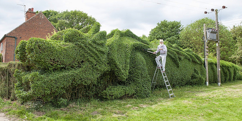 Elderly Man Spent 10 Years Turning 150-Ft-Long Hedge Into Giant Dragon