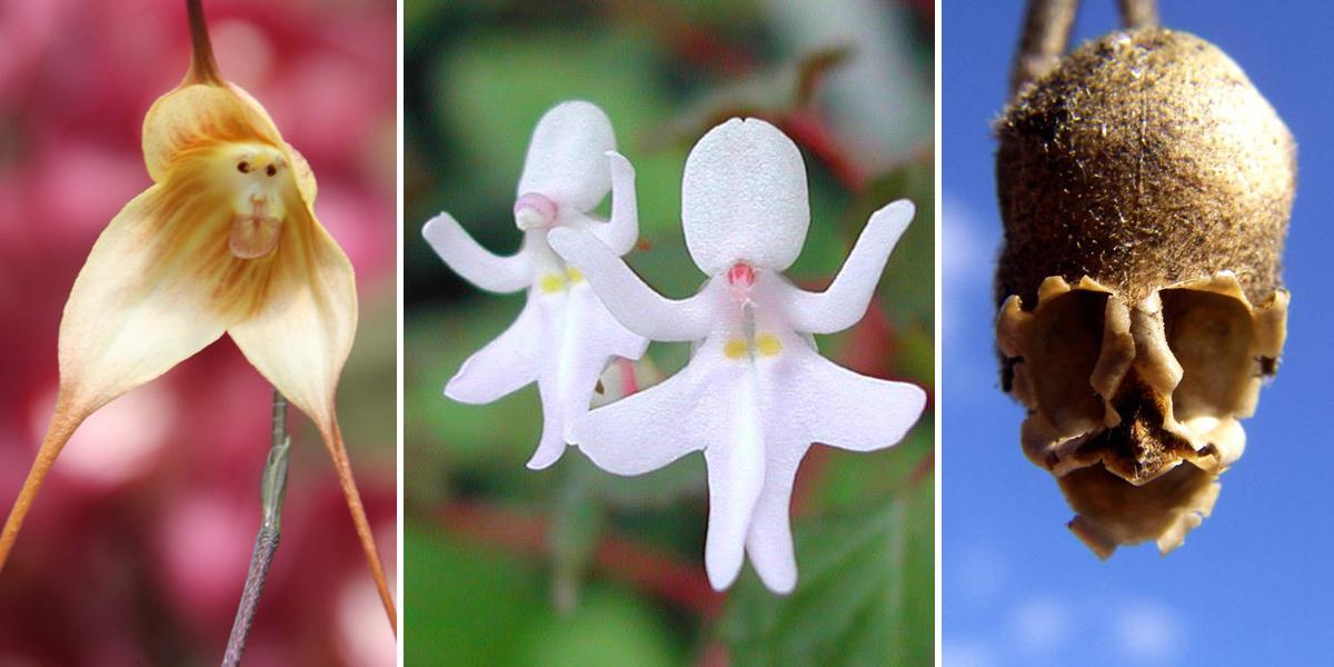 17 Flowers That Look Like Something Else