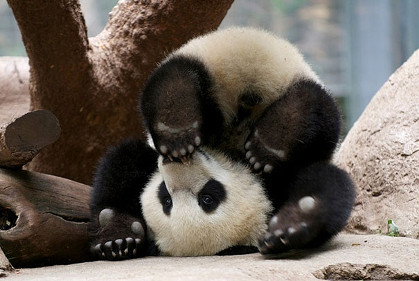 Image of: Dog Snapchats Funnyanimalsdoingyoga20 Bored Panda These 25 Animals Will Teach You How To Do Yoga Bored Panda