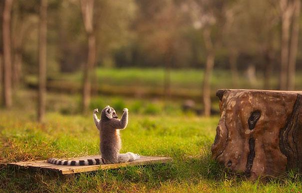 funny-animals-doing-yoga-29