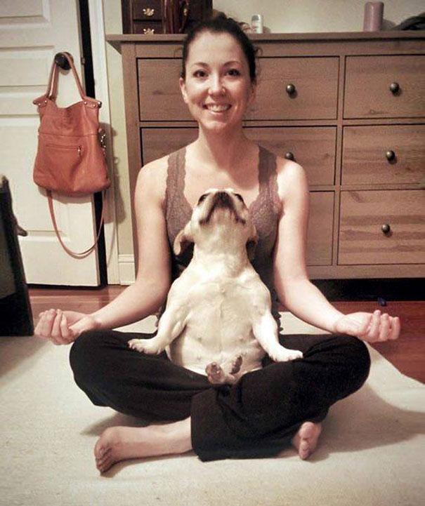 funny-animals-doing-yoga-4