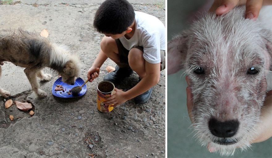 happy-animals-club-pet-shelter-kid-13