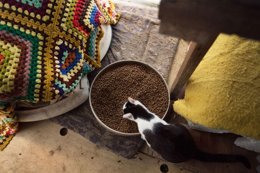 largest-cat-sanctuary-shelter-lynea-lattanzio-16