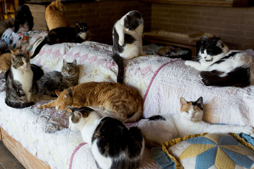 largest-cat-sanctuary-shelter-lynea-lattanzio-19