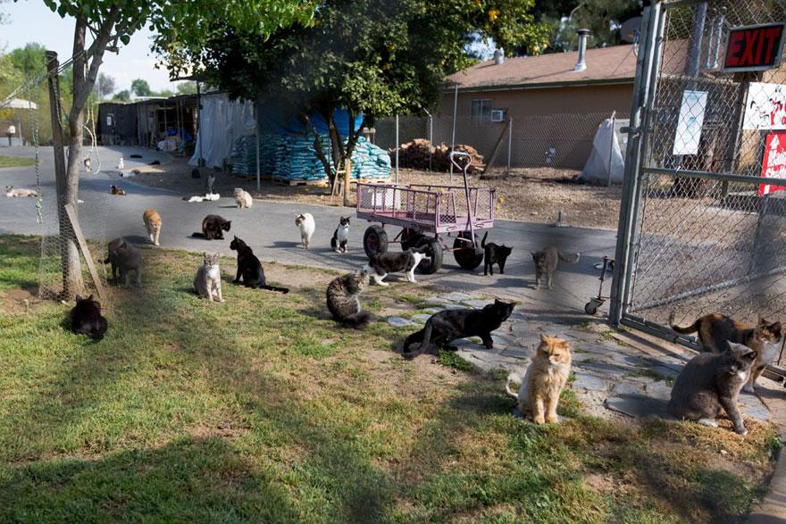 largest-cat-sanctuary-shelter-lynea-lattanzio-21