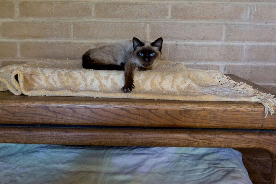 largest-cat-sanctuary-shelter-lynea-lattanzio-24