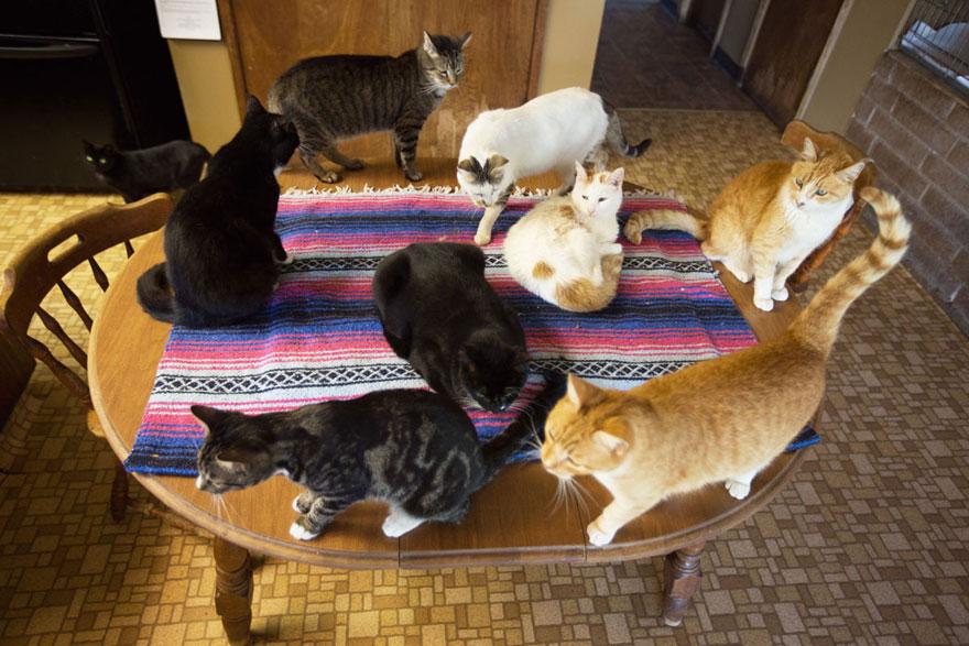 largest-cat-sanctuary-shelter-lynea-lattanzio-3