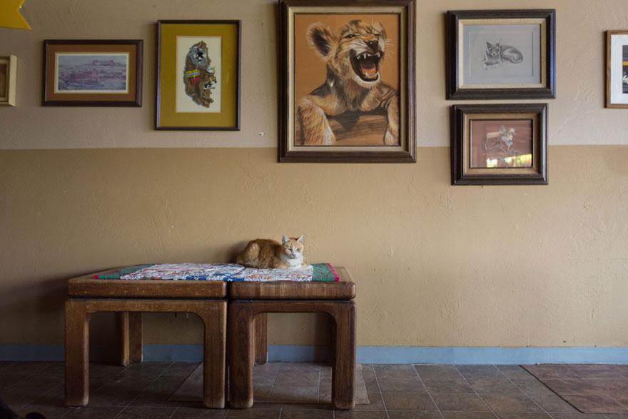 largest-cat-sanctuary-shelter-lynea-lattanzio-4