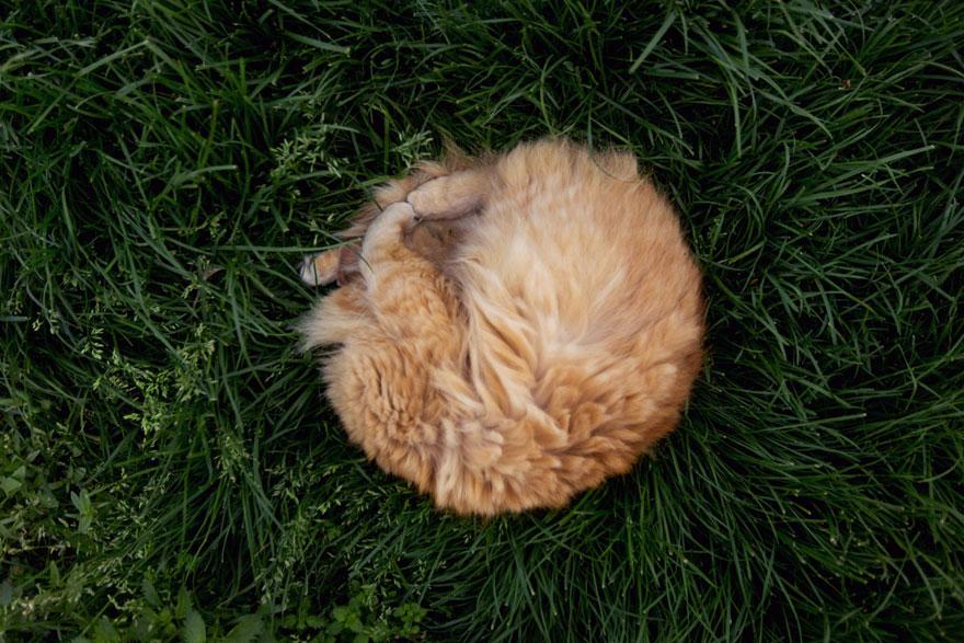 largest-cat-sanctuary-shelter-lynea-lattanzio-6