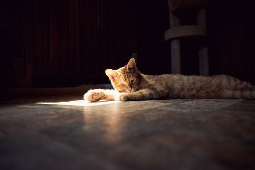 largest-cat-sanctuary-shelter-lynea-lattanzio-7