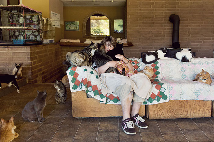 The World's Largest No-Kill Cat Sanctuary Has Saved Over 24000 Furballs