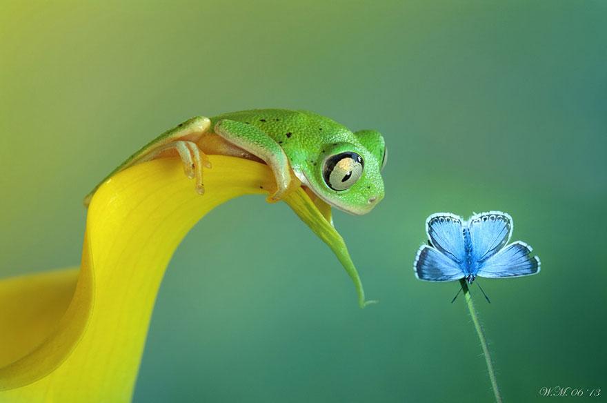 macro-frogs-wil-mijer-4