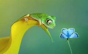 A Magical Miniature World Of Frogs Revealed In Wil Mijer's Photography