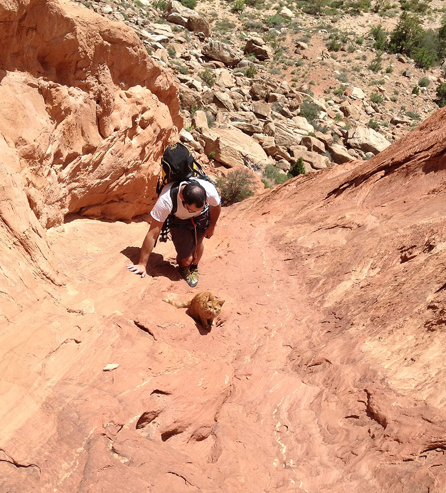 millie-climbing-cat-craig-armstrong-11