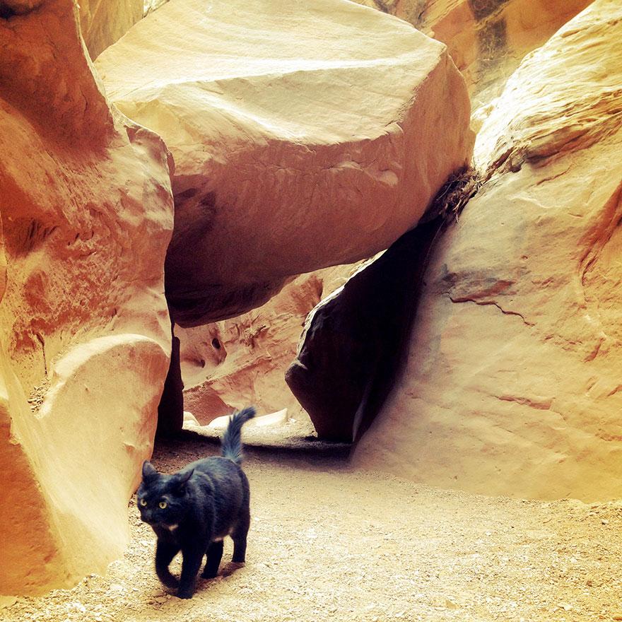 millie-climbing-cat-craig-armstrong-18
