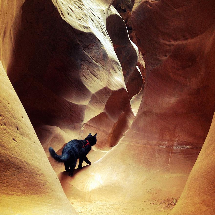 millie-climbing-cat-craig-armstrong-19