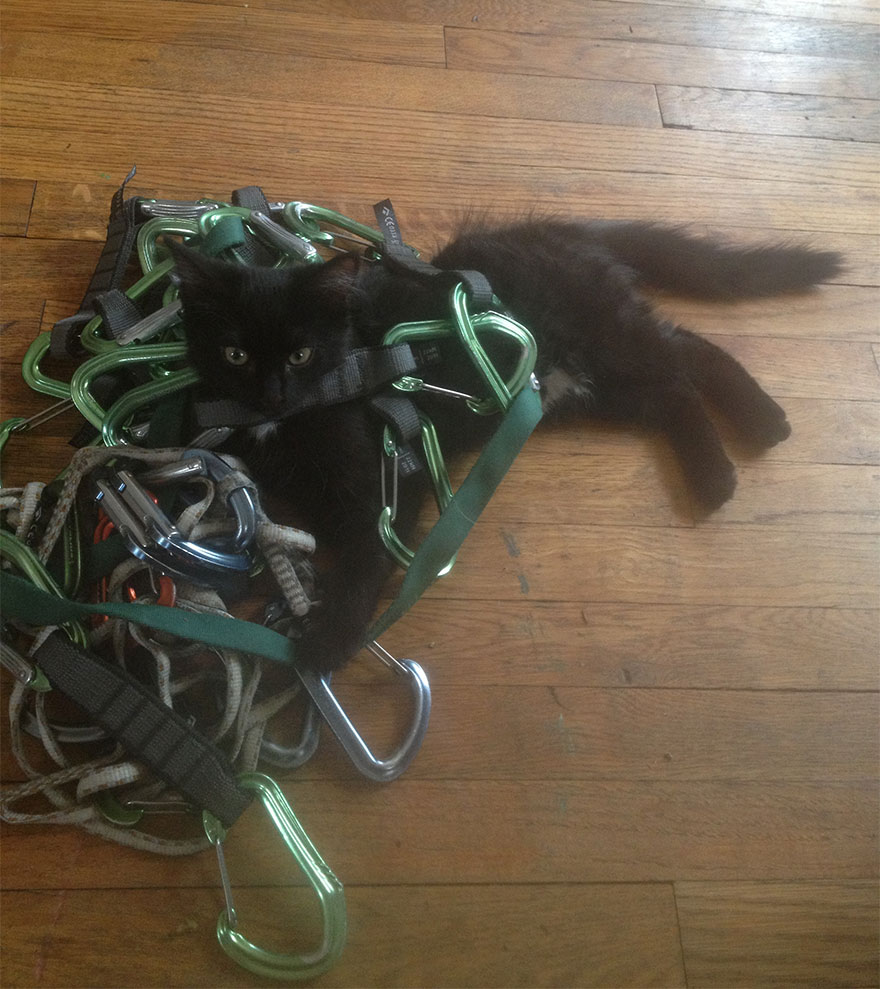 millie-climbing-cat-craig-armstrong-21