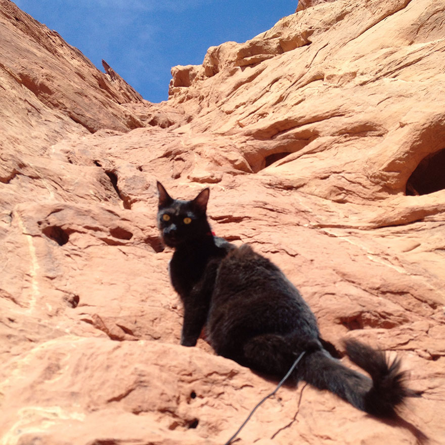 millie-climbing-cat-craig-armstrong-22
