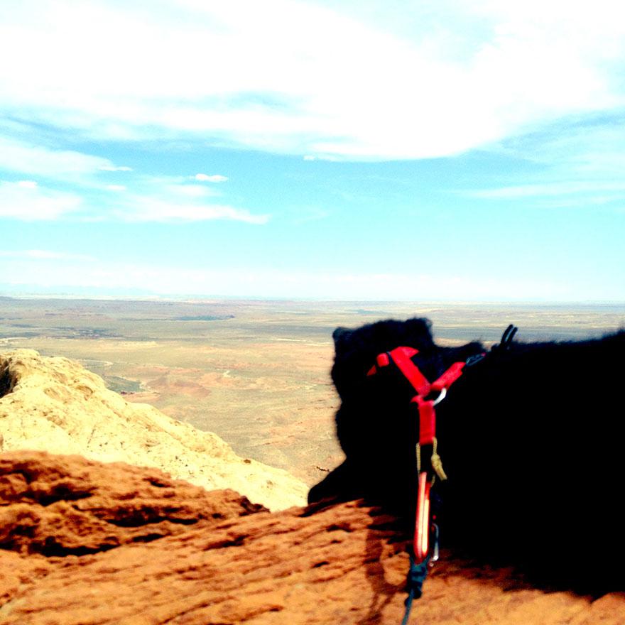 millie-climbing-cat-craig-armstrong-24