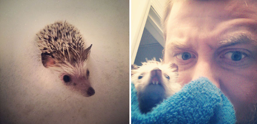 norman-cute-hedgehog-brett-jessie-15