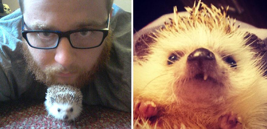 norman-cute-hedgehog-brett-jessie-18