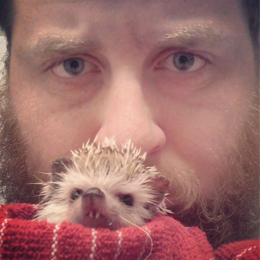 norman-cute-hedgehog-brett-jessie-4