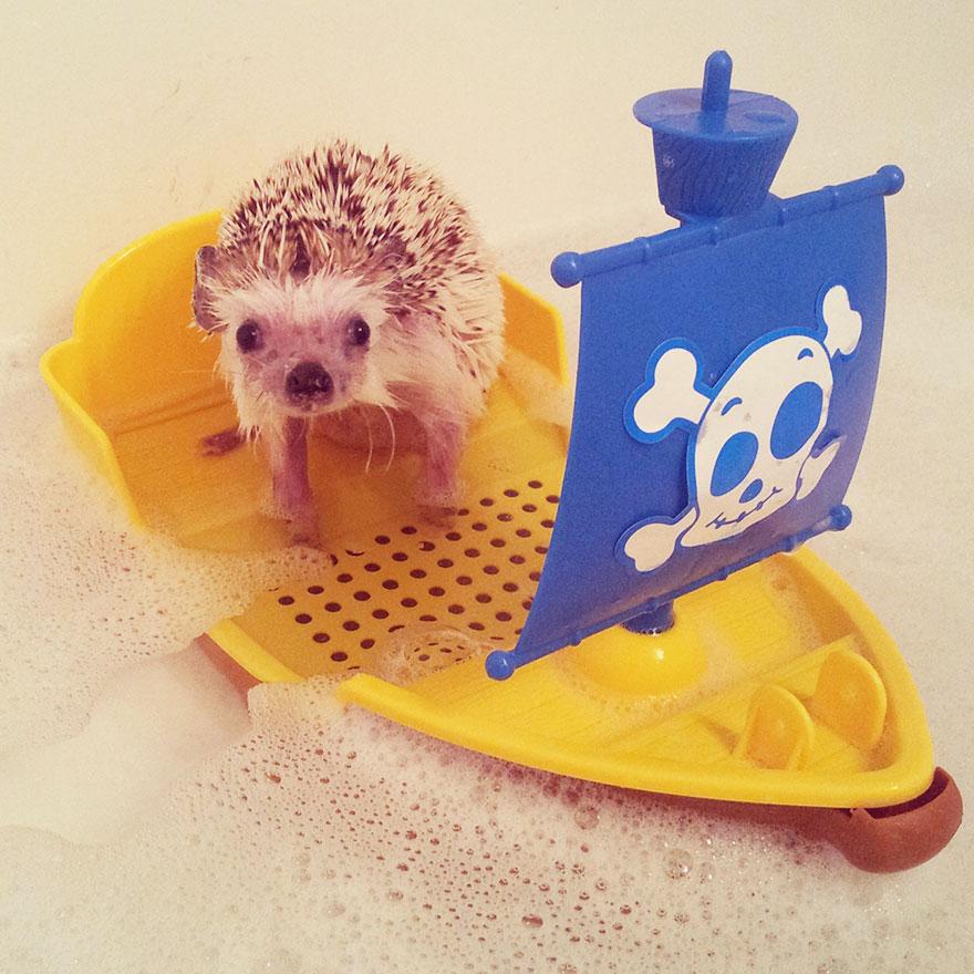 norman-cute-hedgehog-brett-jessie-5