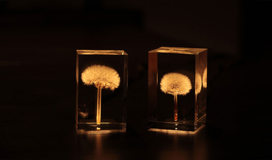 oled-tampopo-lights-dandelions-takao-inoue-6