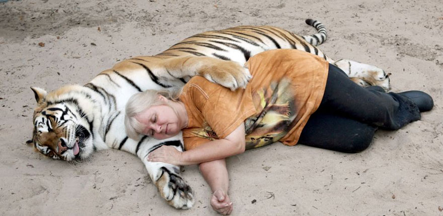 pet-tigers-janda-saber-janice-haley-4