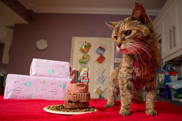 poppy-worlds-oldest-cat-guinness-records-11