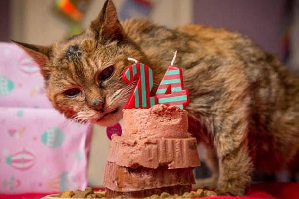 poppy-worlds-oldest-cat-guinness-records-2