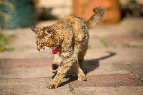poppy-worlds-oldest-cat-guinness-records-3