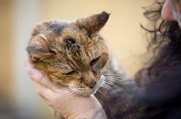 poppy-worlds-oldest-cat-guinness-records-5