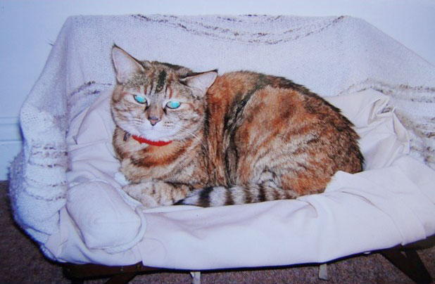 poppy-worlds-oldest-cat-guinness-records-7