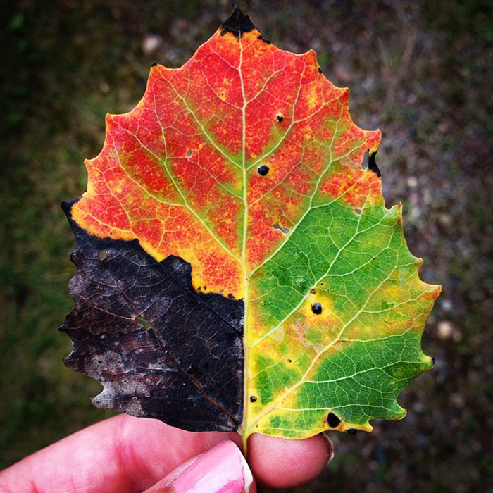 15+ Photos Reveal The Full Spectrum Of Autumn's Colors