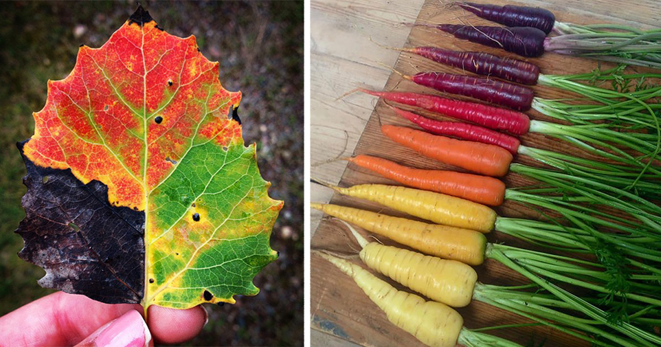 15+ Photos Reveal The Full Spectrum Of Autumn's Colors