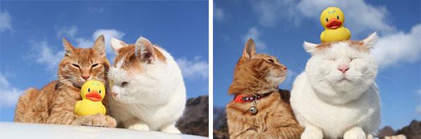 shironeko-happy-cat-36