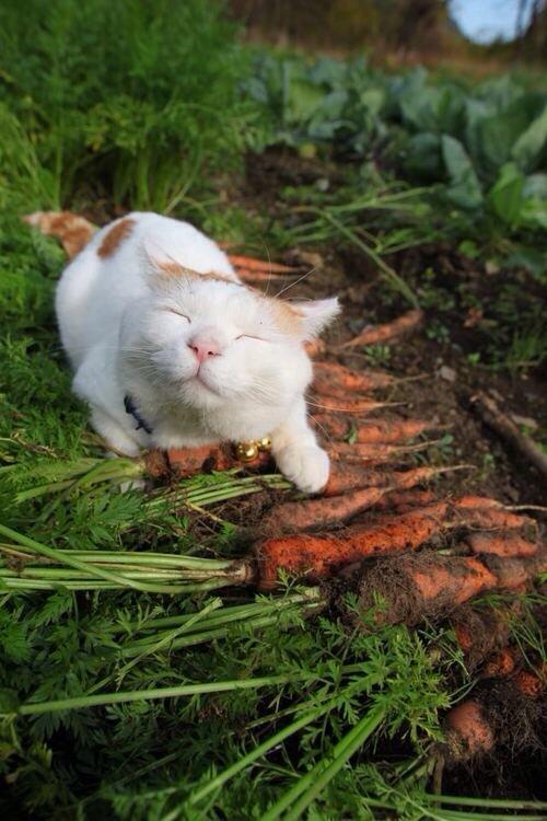 shironeko-happy-cat1-15