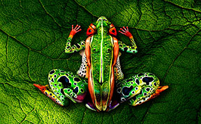 22 Stunning Examples Of Animal Body Art