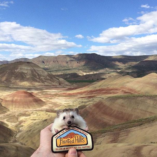 biddy-cute-hedgehog-adventures-10